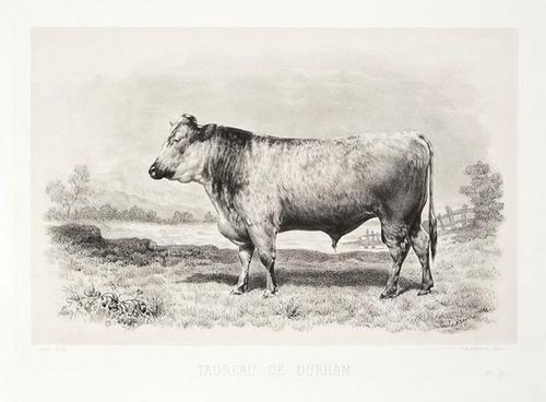 7: Baudement (Émile) Les Races Bovines au Concours Un