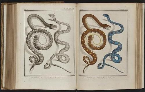20: (George Louis le Clerc, Comte de) Histoire Naturel