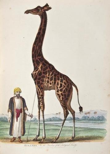 21: (George Louis le Clerc, Comte de) A Natural Histor