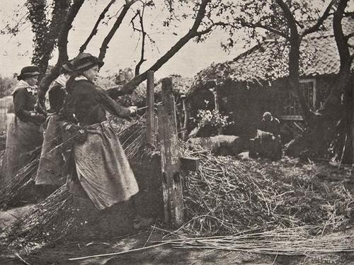 7: Peter Henry Emerson (1856 -1936) Oster-peeling, No