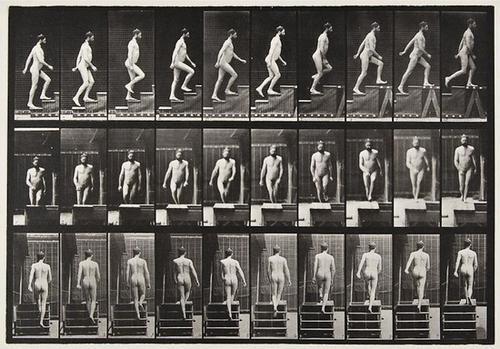 23: Eadweard Muybridge (1830-1904) Animal Locomotion,