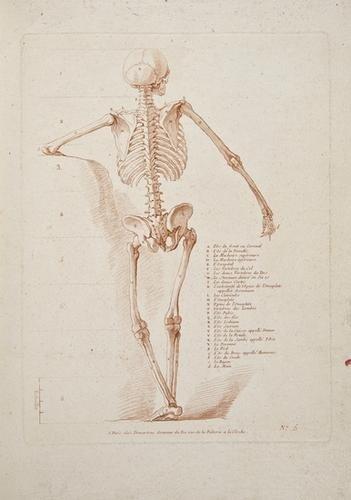 21: Monnet (Charles) [ Etudes d'anatomie a l'usage des