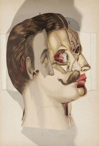 1: Allman & Son. Allman's Anatomical Models