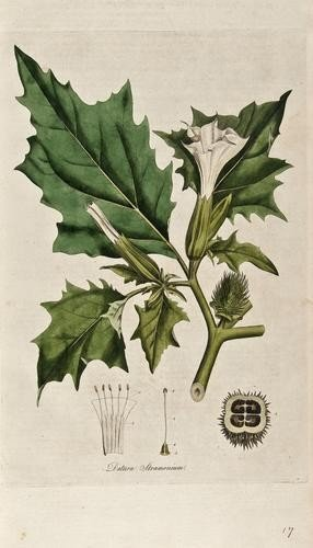 15: Curtis (William) Flora Londinensis