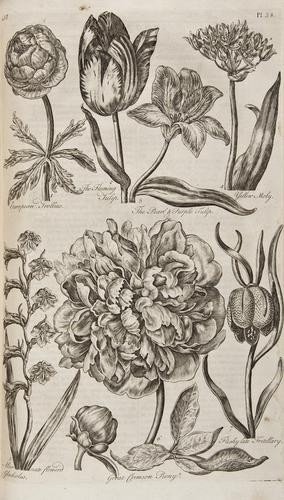 16: [Hale Thomas)] Eden: or, A Compleat Body of Garden