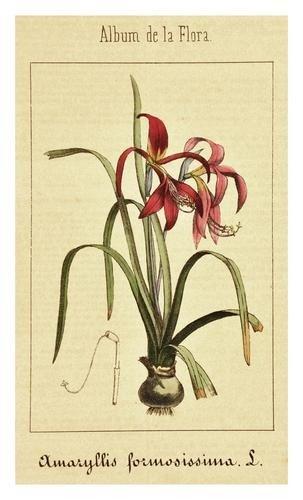 18: Martin de Argenta (Vincente) Album de la flora med