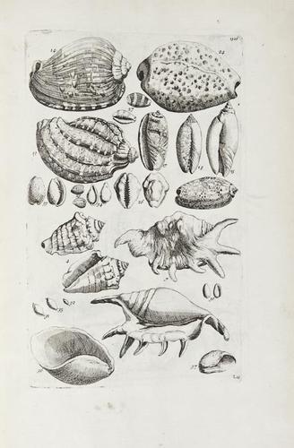 1: Barrelier (Jacques) Plantae per Galliam, Hispaniam