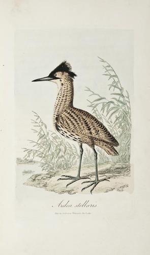 19: Graves (George) British Ornithology