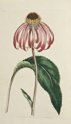 278: Curtis (William) The Botanical Magazine
