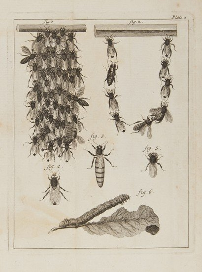 20: Bees.- [Bazin (Gilles Augustin)] The Natural Histo