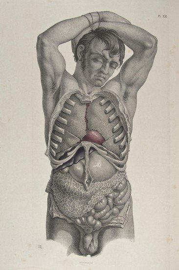 342: Maclise (Joseph) Surgical Anatomy