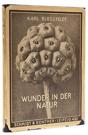 263: Karl Blossfeldt (1865-1932) Wunder in der Natur, 1