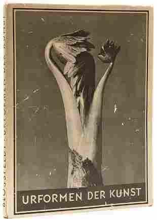 264: Karl Blossfeldt (1865-1932) Urformen der Kunst, 19
