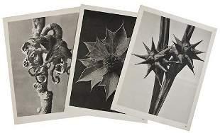 265: Karl Blossfeldt, (1865-1932) Wundergarten der Natu