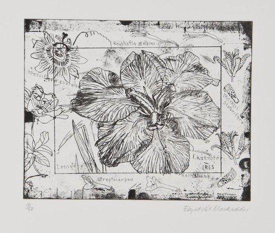 8: Elizabeth Blackadder (b.1931) Iris; Banksia; Beetl