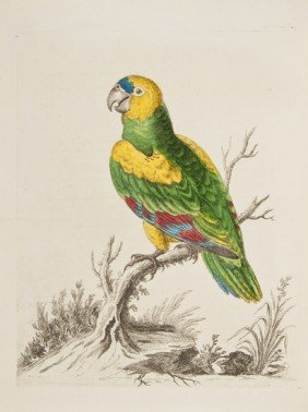 14: Edwards (George) A Natural History of Birds