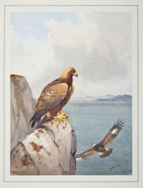 15: (J.C., illustrator).- Evans (David) The Birds of P