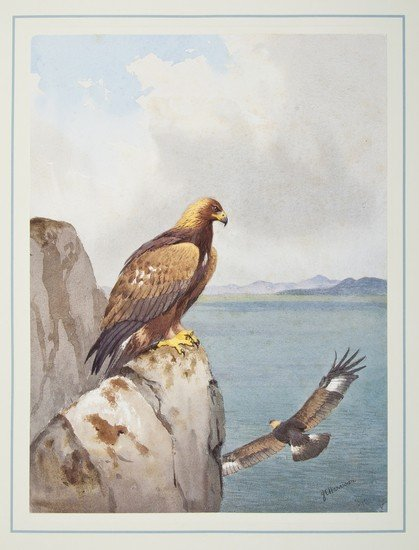 15: (J.C., illustrator).- Evans (David) The Birds of P