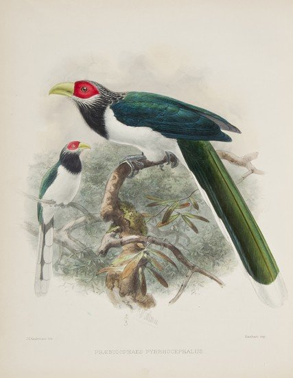 16: (Capt. W Vincent) A History of the Birds of Ceylon