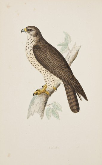 17: (Rev. Francis Orpen) A History of British Birds, 6