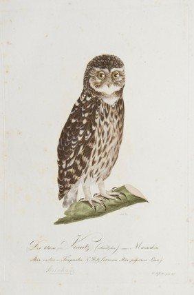 20: Susemihl (Johann Conrad) 6 bird plates from Teutsc