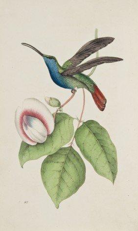21: Swainson (William) Zoological Illustrations