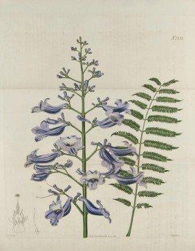 24: Botanical.-