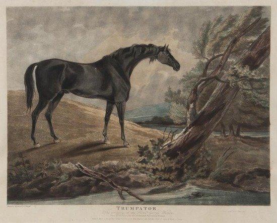 326: John Whessel (fl. late 18th/early 19th century) Po