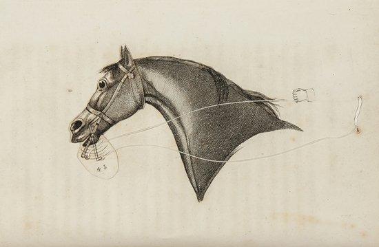4: Adams (John) An Analysis of Horsemanship