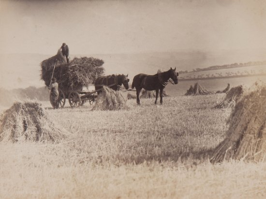 7: Frank Meadow Sutcliffe (1853-1941) Hay Gathering,