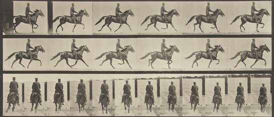 44: Eadweard Muybridge (1830-1904) Animal Locomotion,