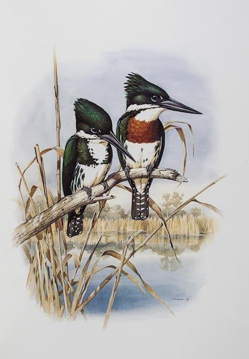 317: Forshaw (Joseph) and William T.Cooper. Kingfishers