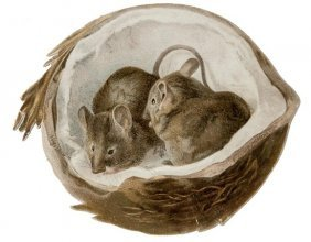 [Potter (Beatrix)] [Two Mice In A Coconut]