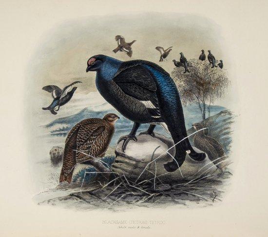 Millais (John Guille) Game Birds and Shooting-Sket