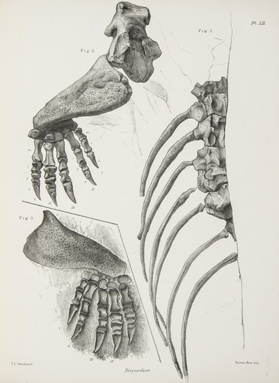 Fossils.- Owen