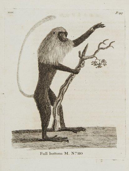 Pennant (Thomas) History of Quadrupeds