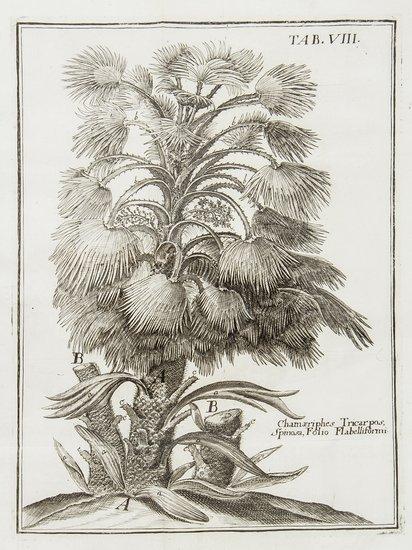 Pontedera (Julius) Anthologia, sive de floris natu