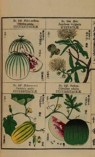 Agricultural Society of Japan. Useful Plants of Ja