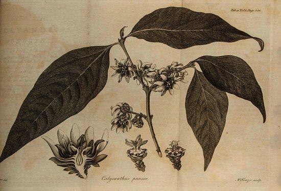 Aiton (William) Hortus Kewensis;
