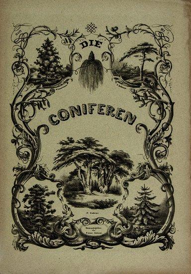 Antoine (Franz) Die Coniferen...