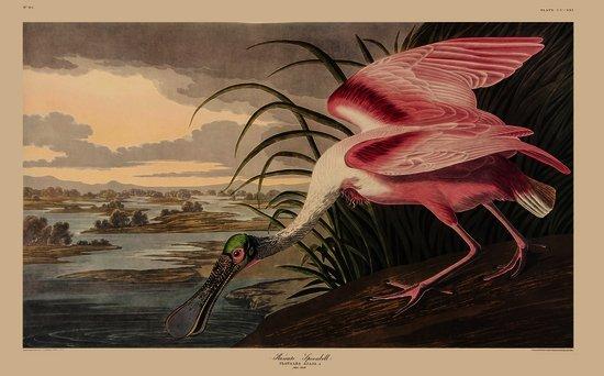 Audubon (John James) The Birds of America: A Selec