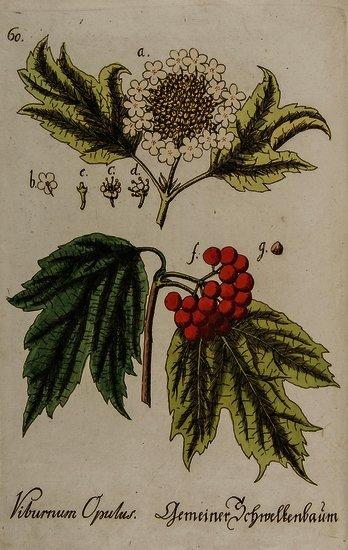 Bellermann (Johann Bartholomäus) Abbildung zum Kab