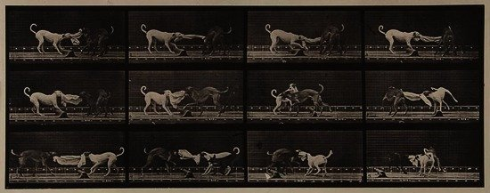 Eadweard Muybridge (1830-1904) Dogs; three, Tuggin