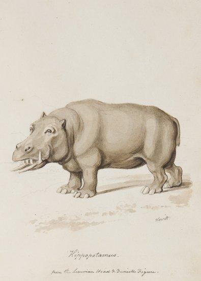 -. William Samuel Howitt (c.1765-1822) Hippopotamu