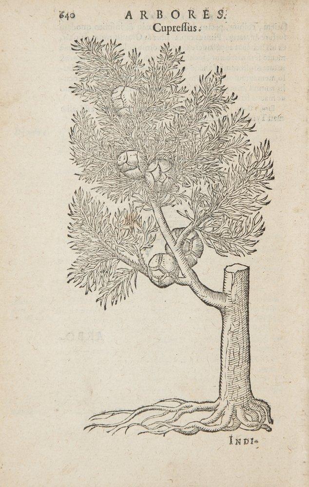Alciati (Andreas) Omnia...Emblemata
