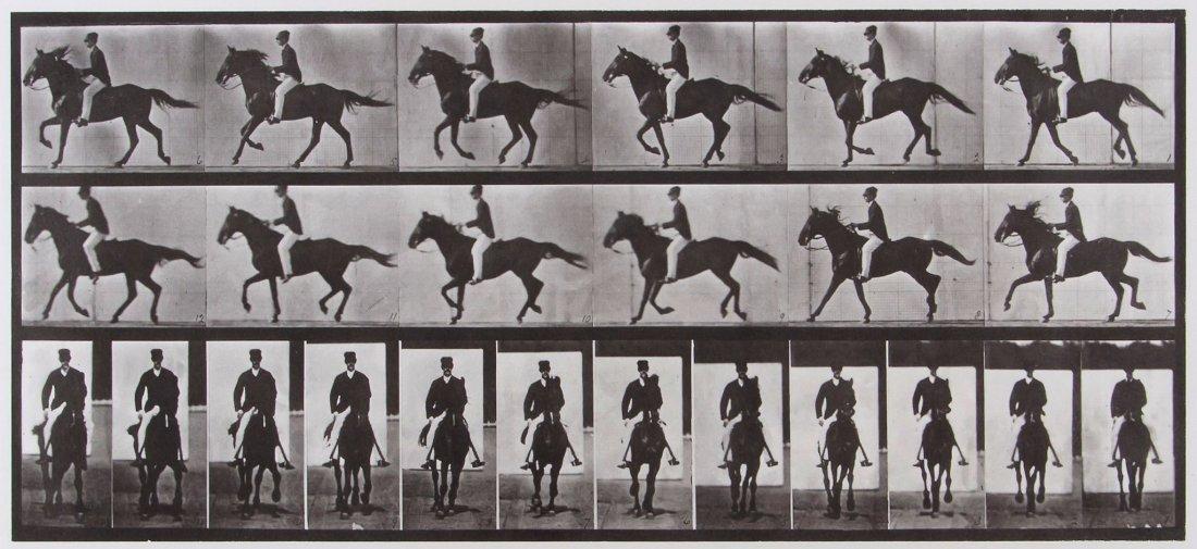 Eadweard Muybridge (1830-1904) - Horse Cantering S