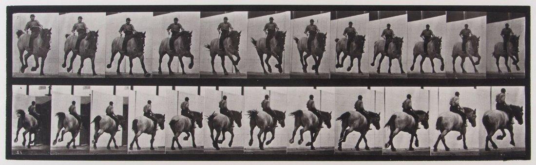 Eadweard Muybridge (1830-1904) - Hansel, Gallop Ba