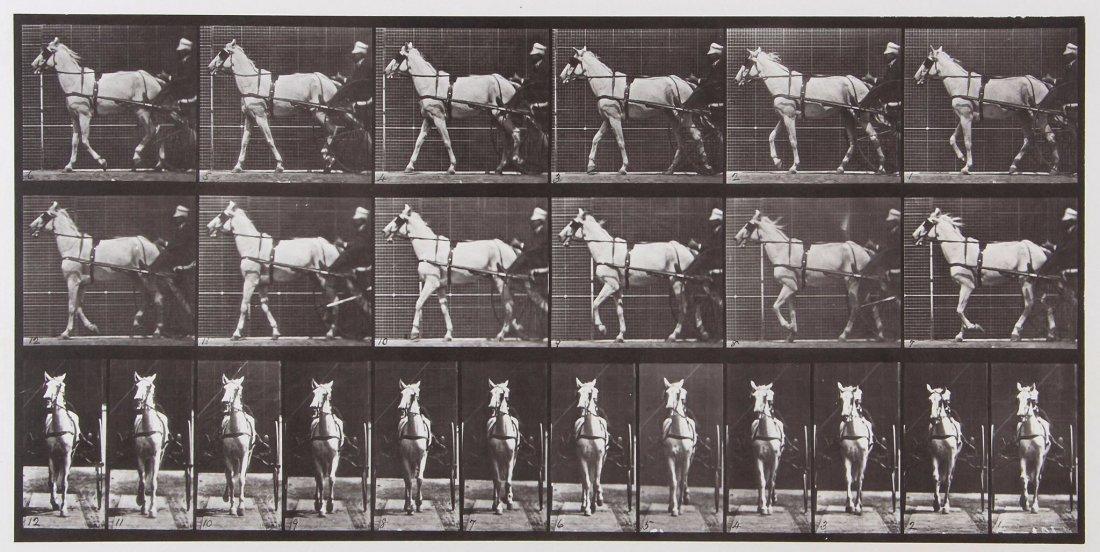 Eadweard Muybridge (1830-1904) - Katydid, Walking,