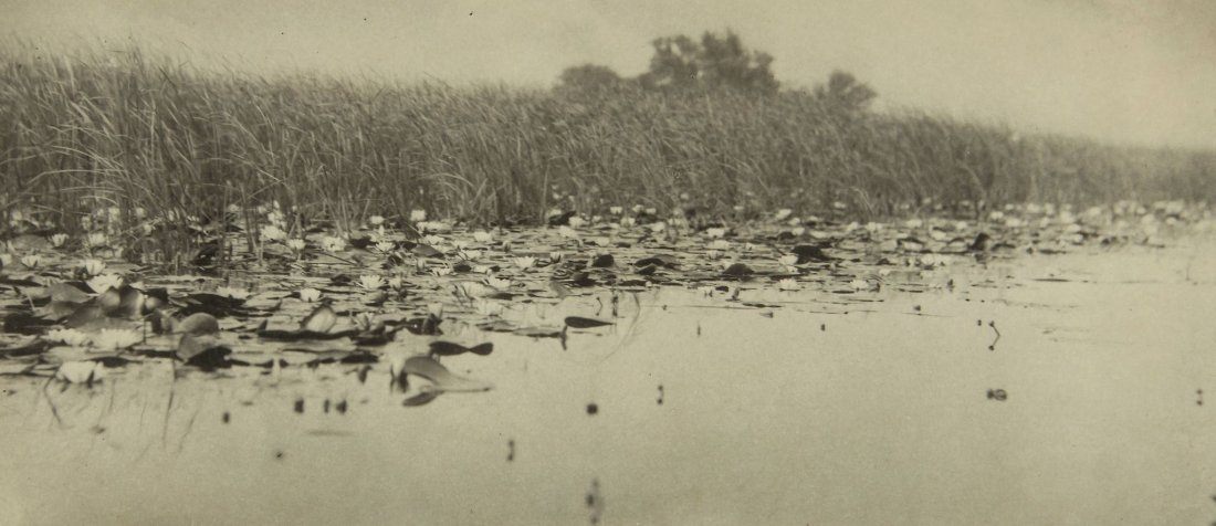 Peter Henry Emerson (1856-1936) - Water Lilies, Pl