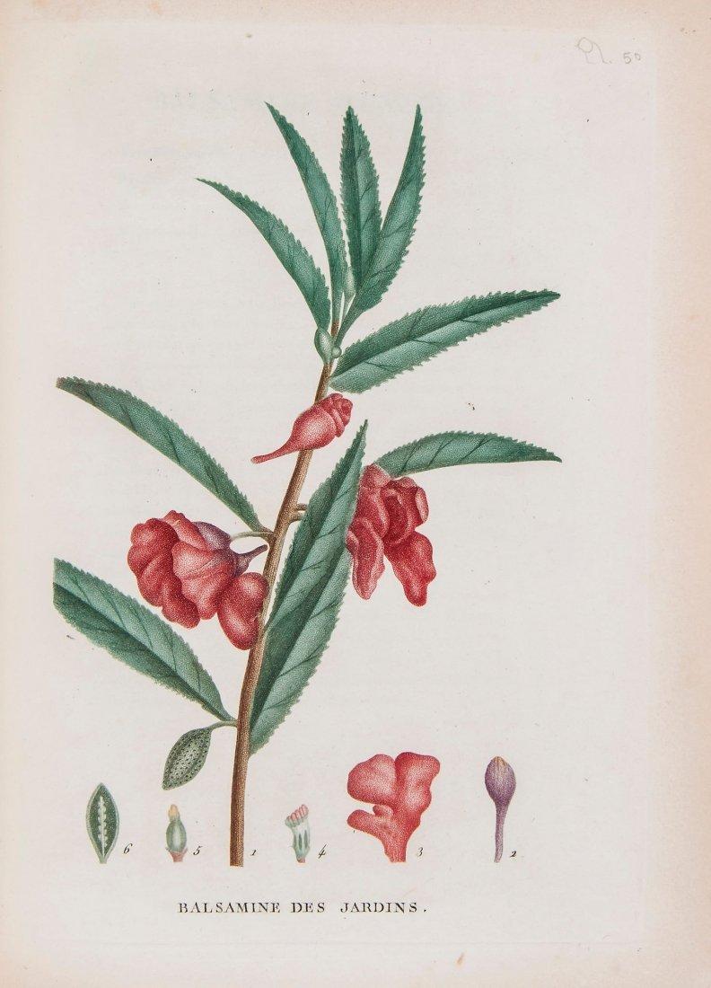 Plantes de la France, Decrites et Peintes d'apres